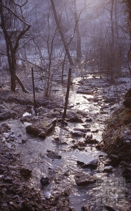 Woodland stream at Tucking Mill c.1965