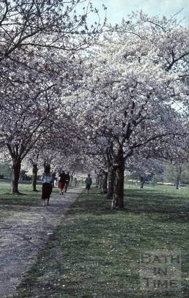 Cherry tree avenue, Royal Victoria Park, Bath 1984