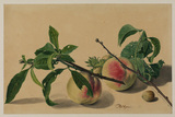 Still life with peaches and hazelnuts