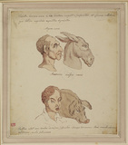 Caricature of two human faces, related to different animals