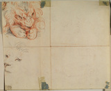 Head and paws of a lion (verso)