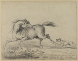 Horse chased by a dog