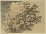 Study of trees (recto)