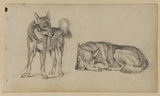 Two studies of a guard dog, standing (left) and lying down (right)
