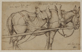 Mule in harness (recto)