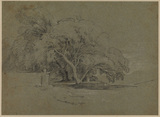 Landscape with a spreading tree
