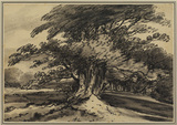 Landscape with clump of trees