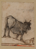 Ox (recto)