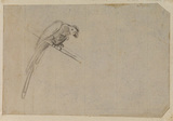 Sketch of a parrot (verso)