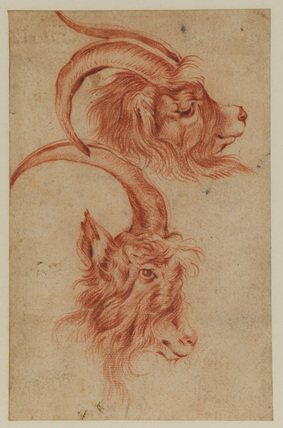Two studies of the head of a goat