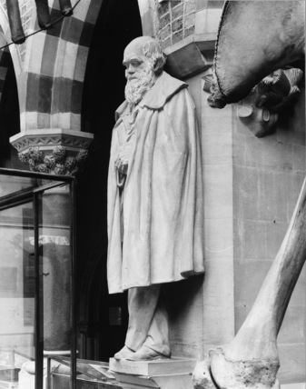 Oxford University Museum of Natural History;Statue of Charles Darwin