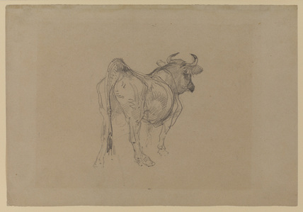 Study of an ox (recto)