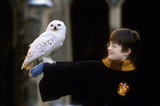 Harry with Hedwig™ on arm