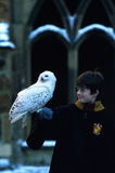 Harry with Hedwig at snowy Hogwarts