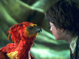 Harry with Fawkes™