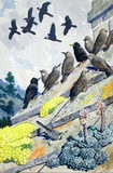 Starlings on a stone roof