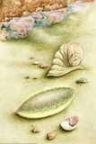 Sea Mouse and Limpets