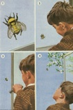 Boy and bee
