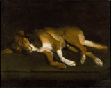 A Dog lying on a Ledge