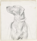 Recto: Study of a Dog