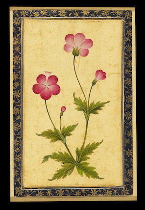 Pink composite flower with leaves
