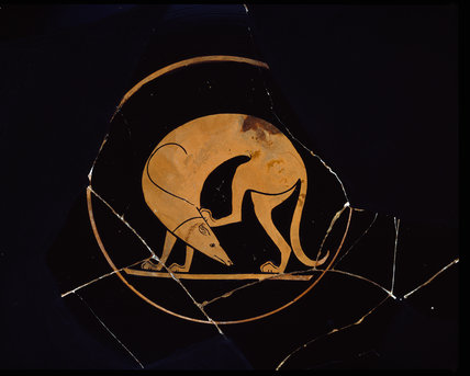Attic red-figure cup depicting a dog scratching his ear with a hindleg in the inside tondo