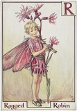 Ragged Robin Fairy