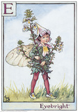 Eyebright Fairy