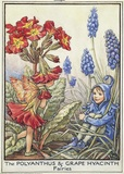 Polyanthus and Grape Hyacinth fairies
