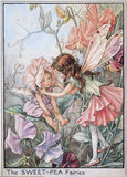 Sweet Pea Fairies