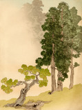 Japanese conifers and trees