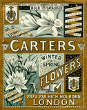 Carters'  Winter and Spring Flowers