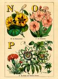 N for Nasturtium, O for Oleander, P for Pink and Passion-Flower