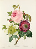 'Rose, Anemone, Clematide'