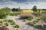 The Dry Garden in summer at RHS Garden Hyde Hall.