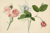 [Nigella damascena between two roses]