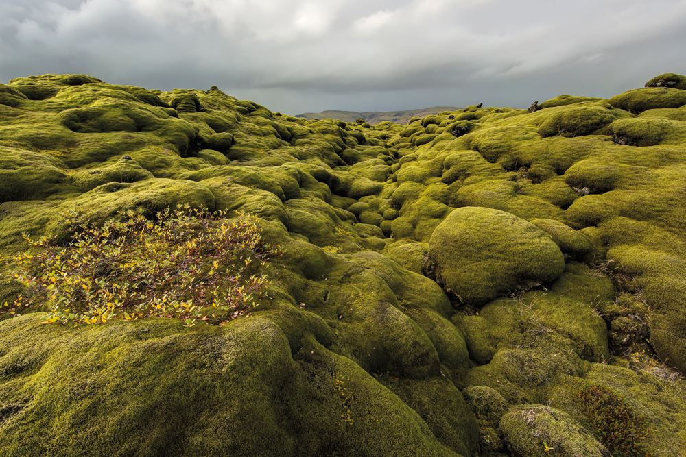 Kirsi MacKenzie: Eldhraun, Islanti