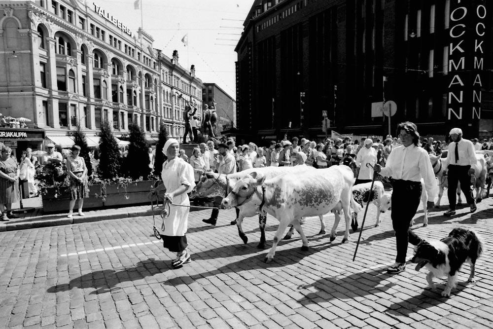 Erkki Raskinen: Miina Äkkijyrkkä ja lehmät valtasivat Helsingin keskustan vuonna 1988.