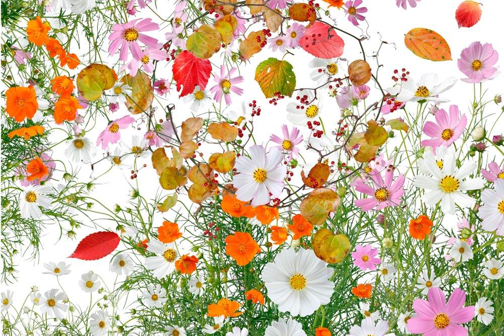 Katsuhiro Noguchi: Flowers of Fukushima, yksityiskohta