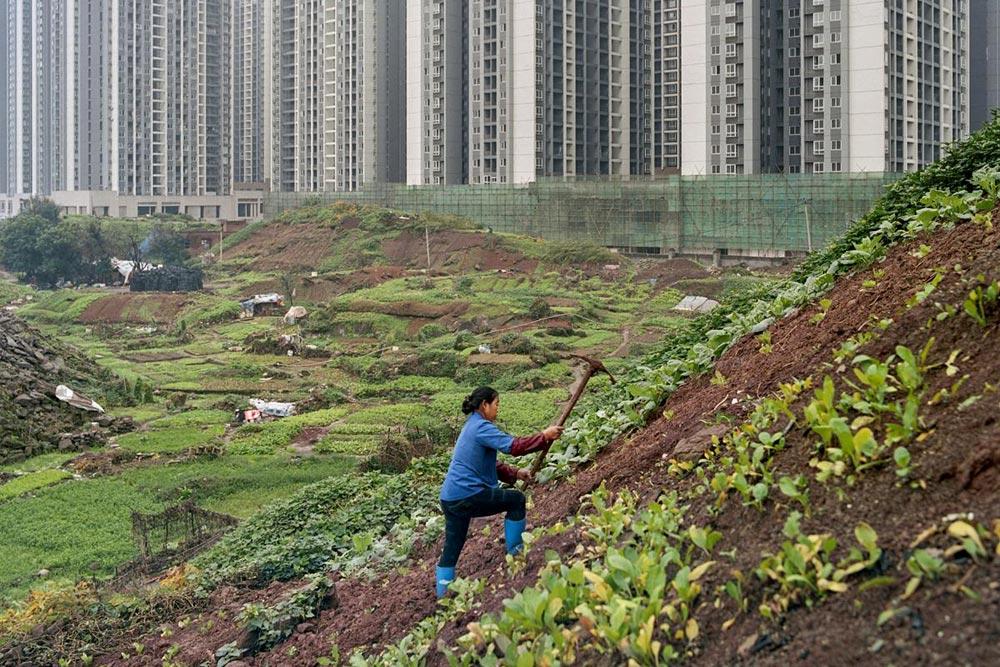 Chongqingin alue Kiinassa on yksi tällä hetkellä maailman nopeimmin urbanisoituvimmista alueista. Monet kaupunkiin siirretyistä ihmisistä pyrkivät edelleen selviytymään maanviljelyn keinoin. Valokuvaaja Tim Franco (s. 1982) kuvasi alueen muutosta viiden vuoden ajan sarjassaan Metamorpolis (2015).