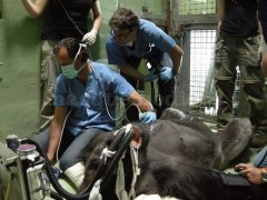 Proyecto Internacional sobre Cardiopatías en Primates - Dr. Fernando Cabrera