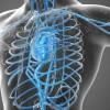 Vascular  El diagnóstico especializado del sistema vascular - Ecocardiografía