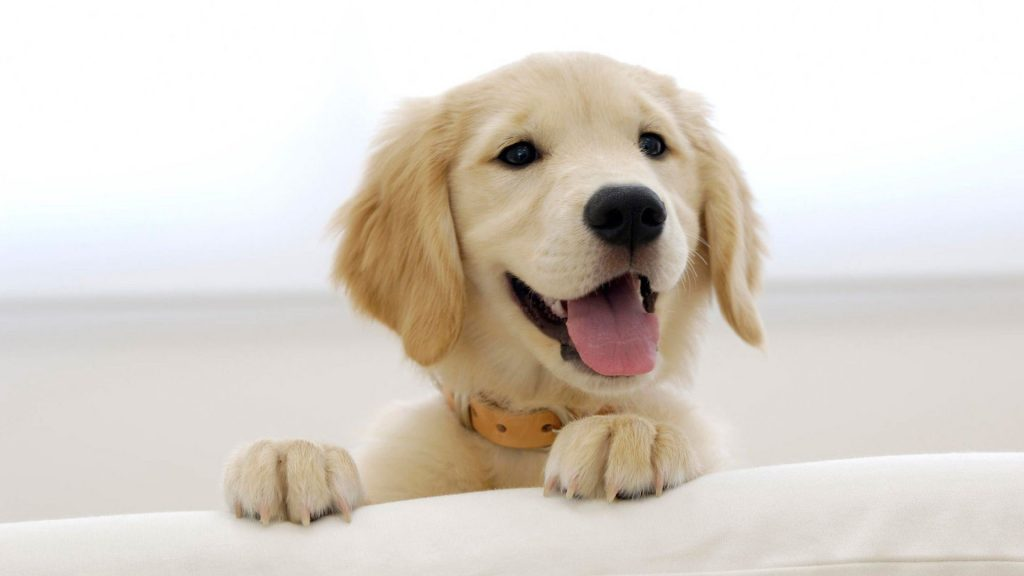 68447690-pets-wallpapers