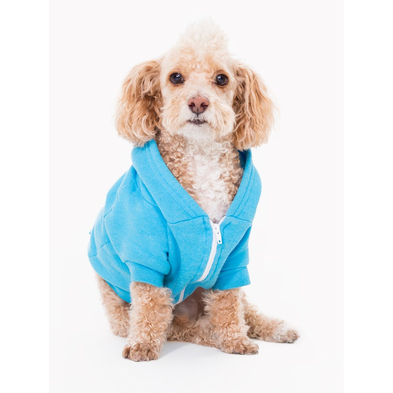 American Apparel Dog Clothes Uk