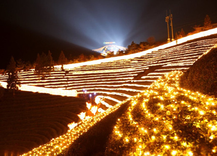 Festival de luces en el campo de té verde de Boseong