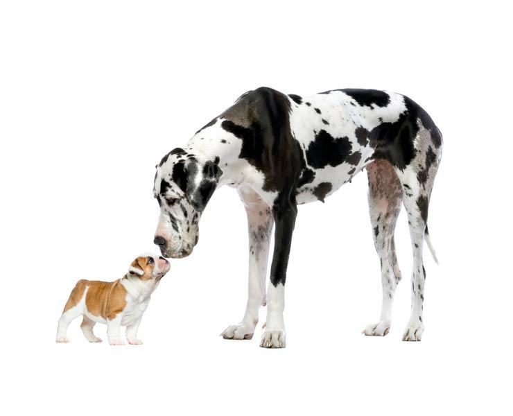 Bulldog gdpr kurs mobil app