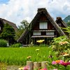 Shirakawago japan 582