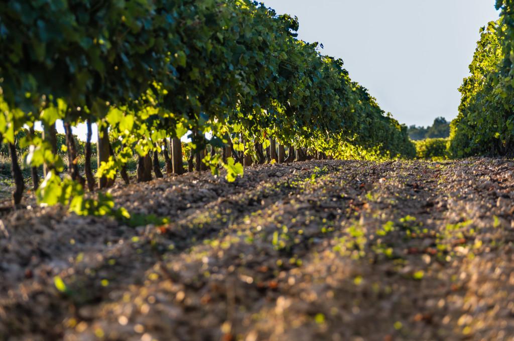Vineyards 002 HR