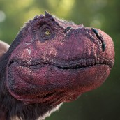 dinosarus_in_the_wil_IjITl