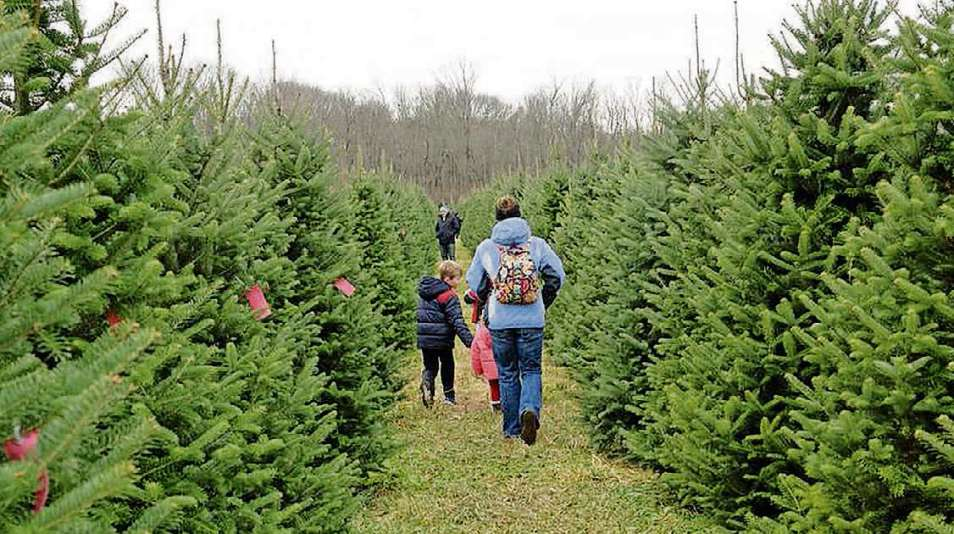 - Where You Can Buy Fresh-cut Christmas Trees - Dayton Daily News